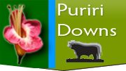 puriri downs logo